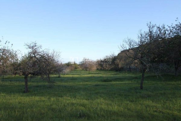 Beautiful plot for sale close to Ibiza