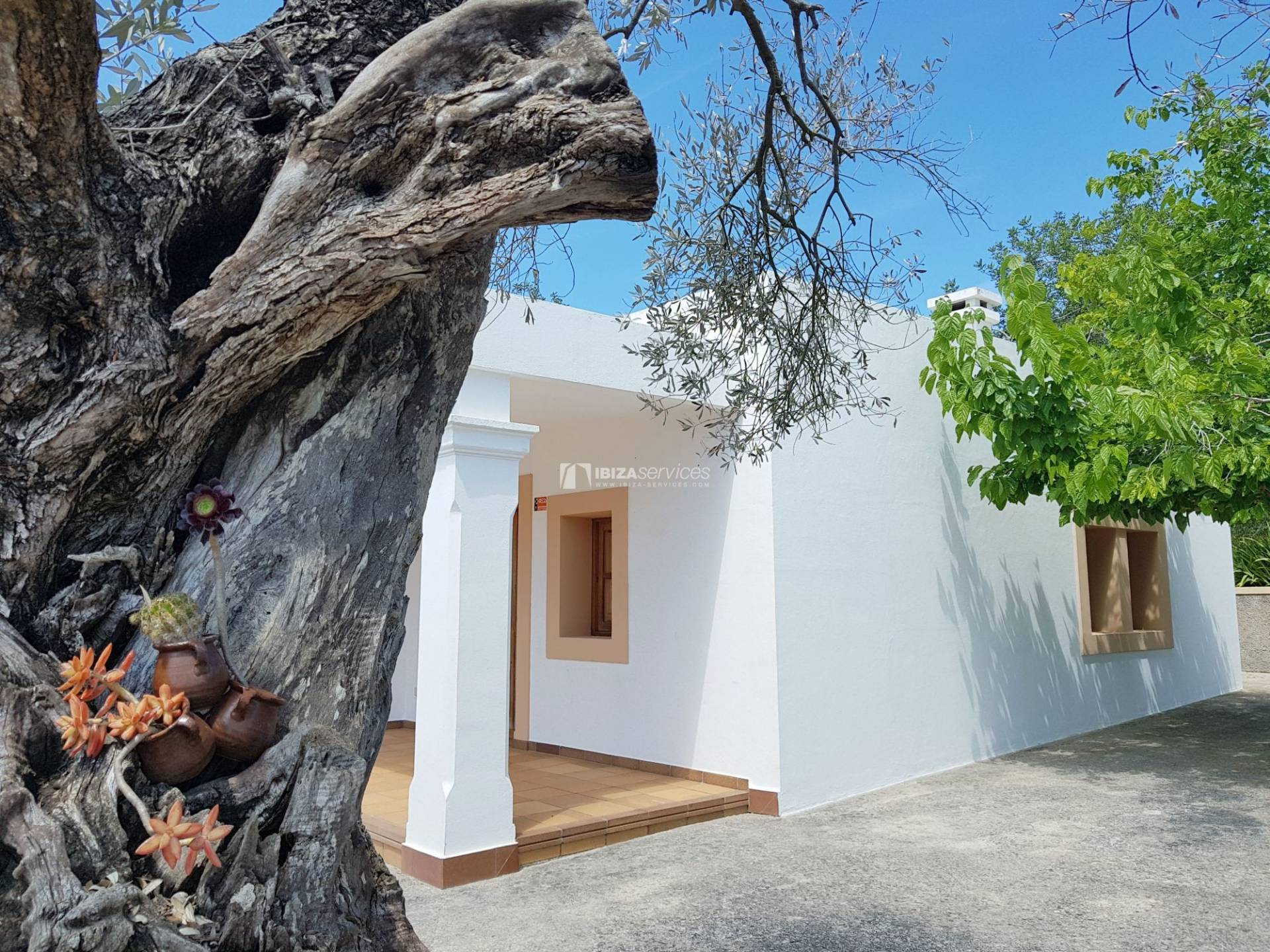 Ancient finca located in the heart of the village of St Gertrudis. perspectiva 22