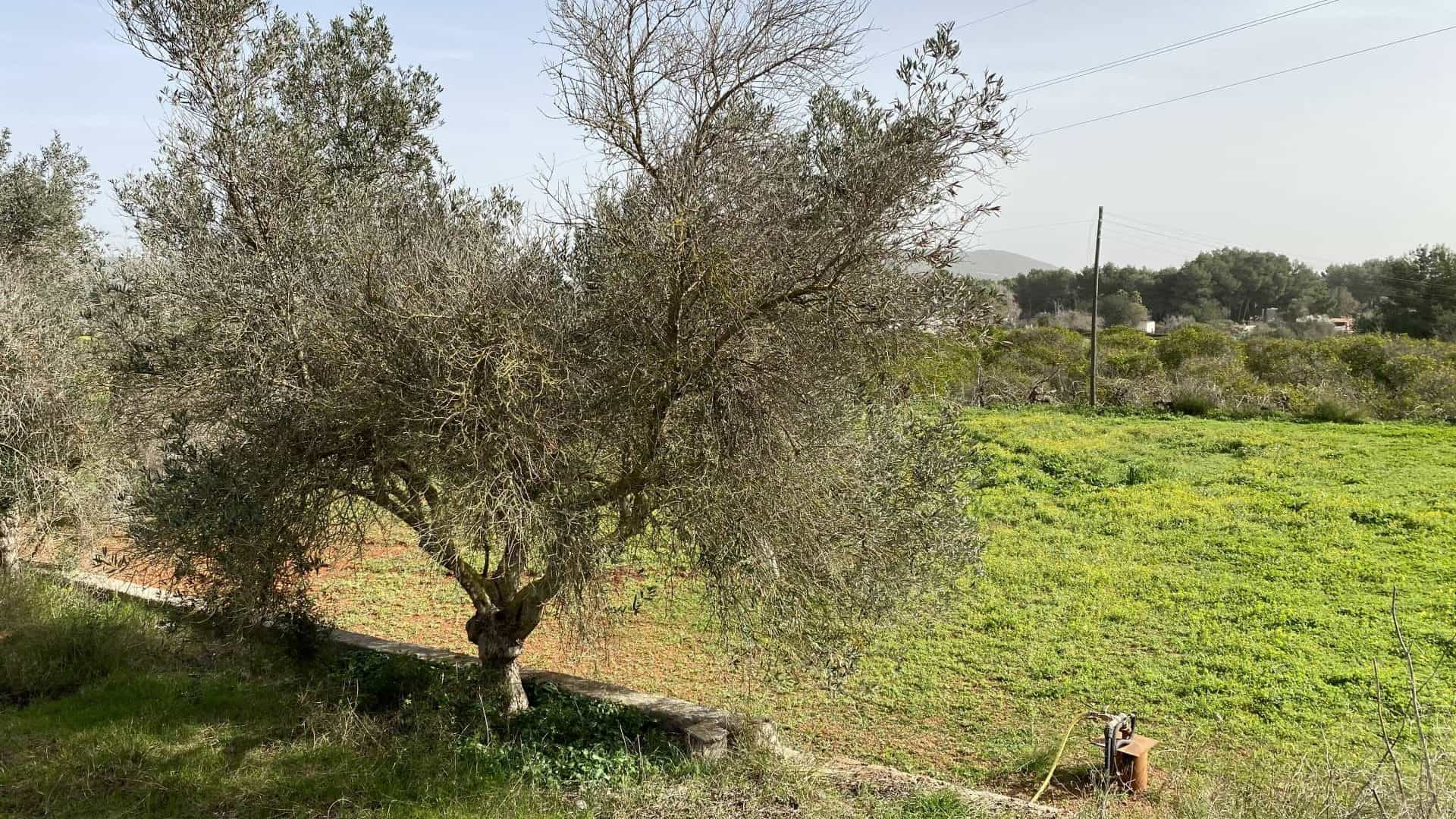 Buy land in St Gertrudis to build a house