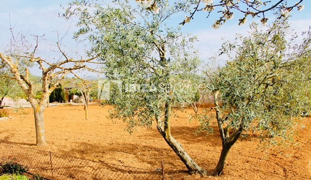 Charming Ibizan country house close to St.Eulalia perspectiva 22
