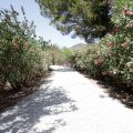 Finca km2 Ibiza 4 bedroom for rent