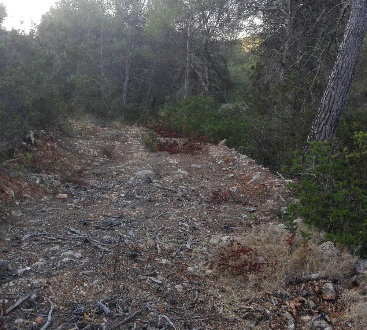 Rustic land for sale close to Sant Mateo